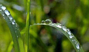 Closeup photo of water droplets on blades of grass